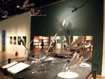 大昆虫博(2010年)