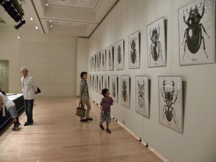 中嶋大道展「クワガタ大図鑑」(2012年)