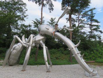 蟻に、最初に乗った人です!